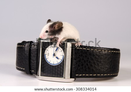 Little mouse  - stock photo