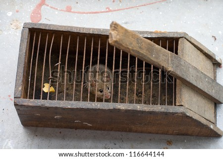 Little mouse caught in a mousetrap - stock photo