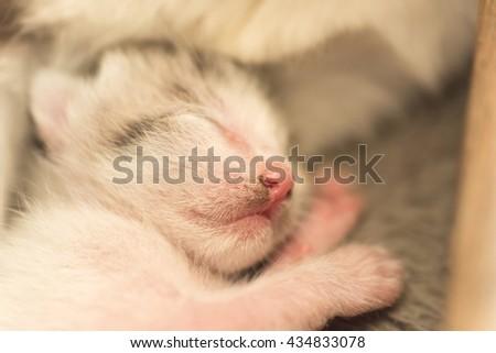 little newborn cat sleep, close up image - stock photo