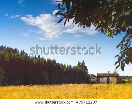 Little old hut between yellow field and dark wood