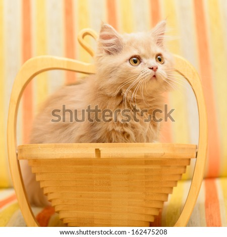 little Persian kitten playing in a wooden basket