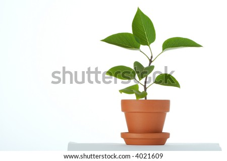 Little plant in small flower pot. Isolated on white background. Space for text. - stock photo