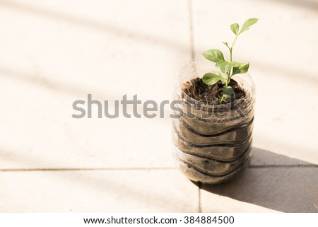 Little plant in the plastic bottle on the floor by selective focus - stock photo