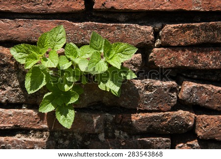 Little Plant on old bricks wall background - stock photo