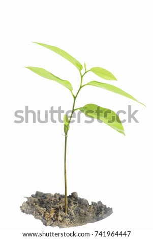 Little plant tree  Isolate on white Background