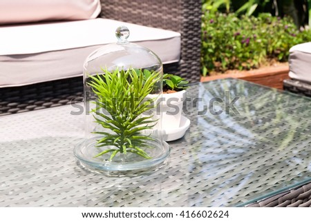 little plants decorate in glass bottle
