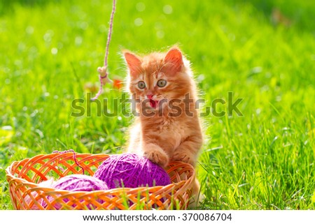 Little playful kitten with a wool of thread on the green grass - stock photo
