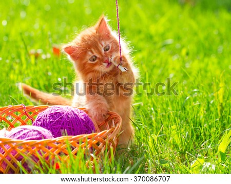Little playful kitten with a wool of thread on the green grass