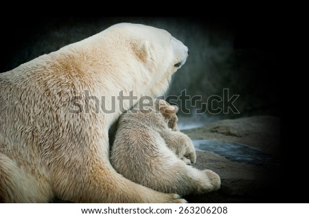 Little polar bear cub with his mom - stock photo