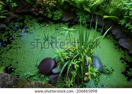 little pond with green plants - stock photo