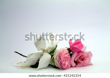 little posy of delicate roses white bow isolated - stock photo