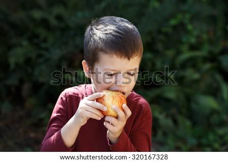 Little preschooler boy eat apple in park  - stock photo