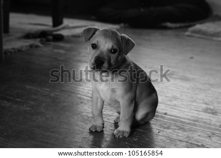 Little pup sitting alone in a dark empty room. Low light image - stock photo