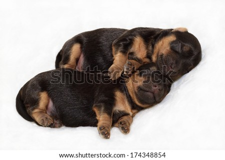 Little Puppies Sleeping