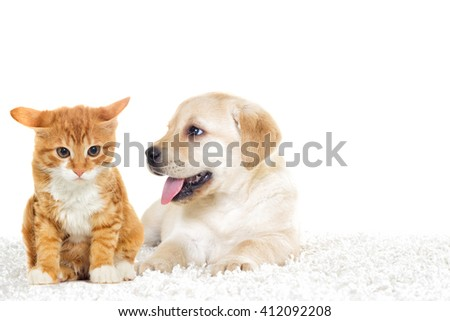 little puppy and kitten