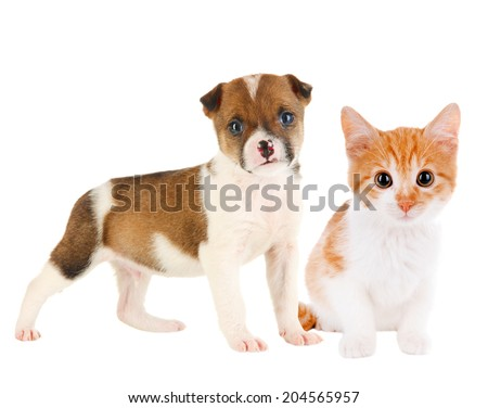 Little puppy and kitten isolated on white