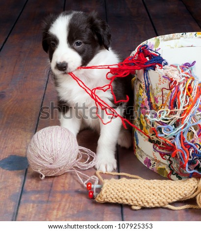 Little puppy dog making a mess of balls of wool