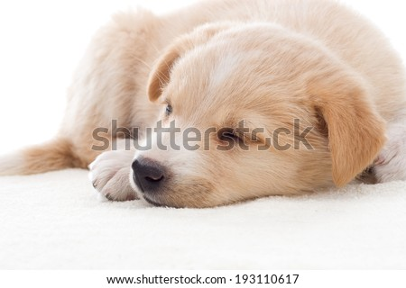 Little puppy sleeping