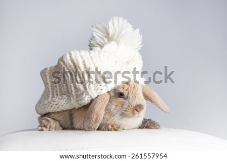 Little rabbit in a knitted cap - stock photo