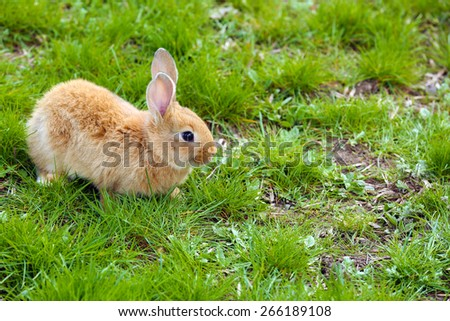 Little rabbit in grass close-up