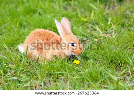 Little rabbit in grass close-up - stock photo