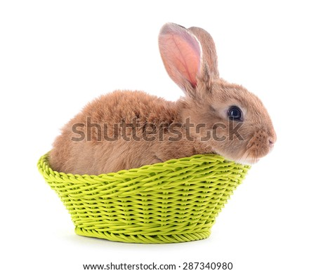 Little rabbit in wicker basket isolated on white - stock photo