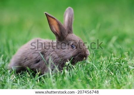 Little rabbit on green grass in summer day - stock photo