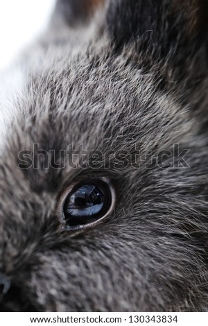 Little rabbit on white closeup eye
