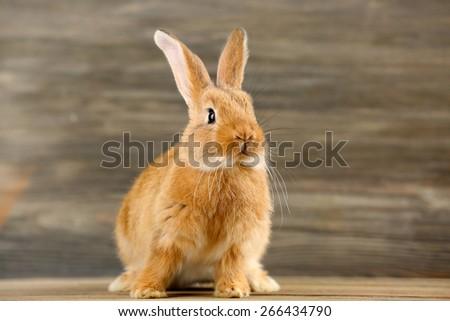 Little rabbit on wooden background - stock photo