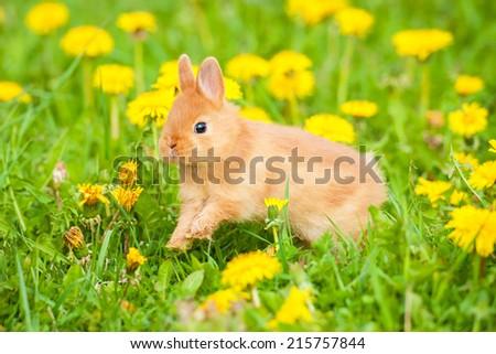 Little rabbit running outdoors - stock photo
