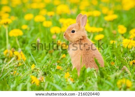 Little rabbit sitting in flowers - stock photo