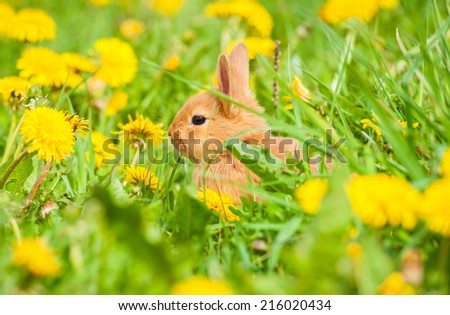 Little rabbit sitting in the grass - stock photo