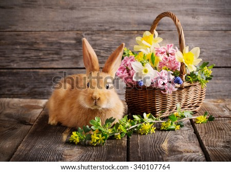 little rabbit with spring flowers - stock photo