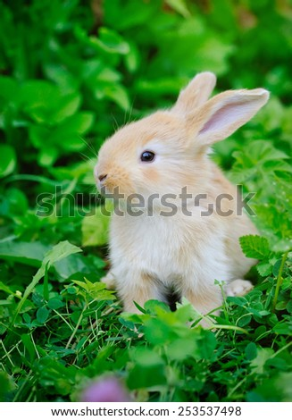 Little rabbiti on green grass - stock photo