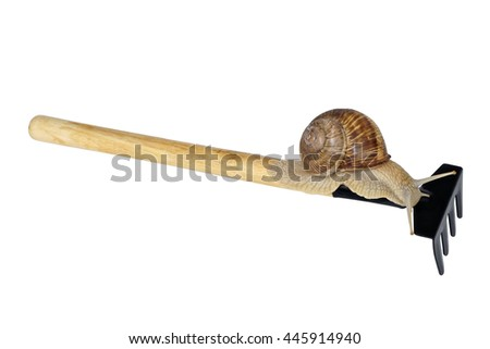 Little rake with snail isolated on white background close up - stock photo