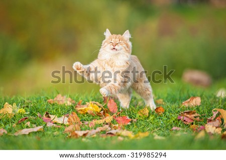 Little red cat playing in the leaves in autumn - stock photo