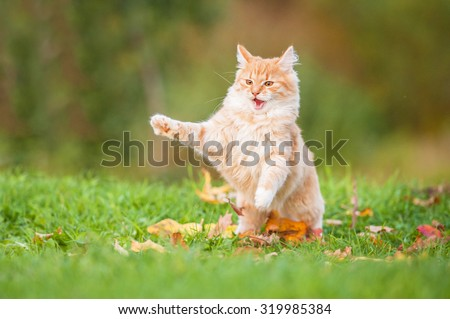Little red cat playing outdoors in autumn - stock photo