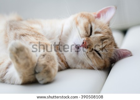 little red cat sleeping in white bed - stock photo
