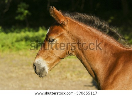 little red foal standing on a background of green grass