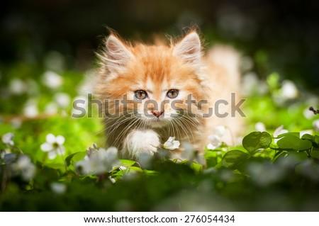 Little red kitten sitting in flowers - stock photo