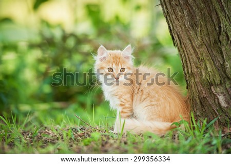 Little red kitten sitting outdoors in summer  - stock photo