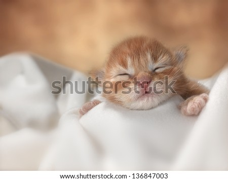 Little red kitten under white blanket