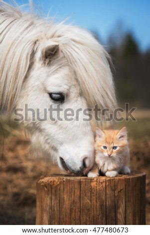 Little red kitten with white shetland pony