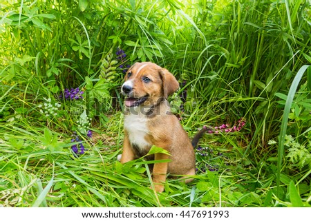 Little red  puppy sitting in tall grass and lupine flowers