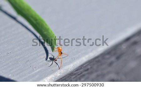 Little Red Spider on a Flower Stem - stock photo