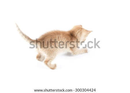 Little red stripped kitten isolated on white