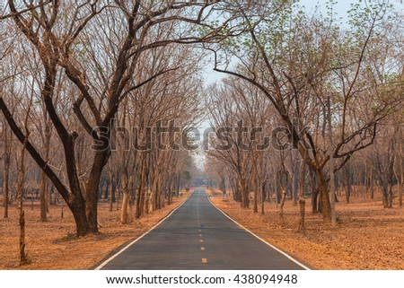 Little road through row of trees