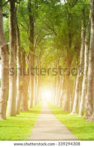 Little road through row of trees. Natural concept. - stock photo