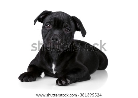 Little sad black puppy on a white background - stock photo