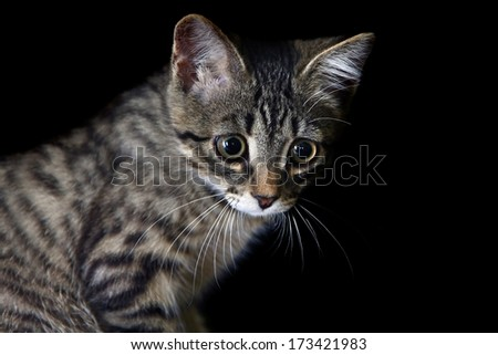 Little sad kitten on a black background